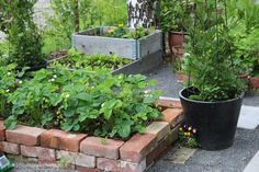 Tuplasti terapiaa Greenhouse, Food Garden, Garden, Plants, Home And Garden