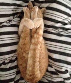 #17 The tricky apanasana hold is a breeze for them | 32 Reasons Cats Are Born Yoga Masters