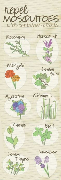 Get rid of the bug spray and repel mosquitos naturally using these plants.   23 Diagrams That Make Gardening So Much Easier