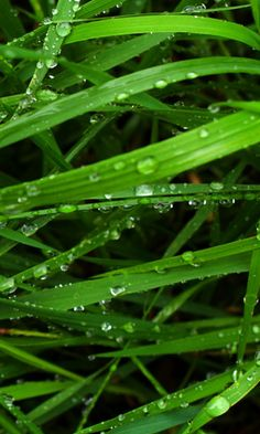 HD wet grass