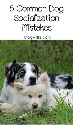 Yes, there actually is a right and a wrong way to socialize a pooch! Make sure you're not making these 5 common dog socialization mistakes!