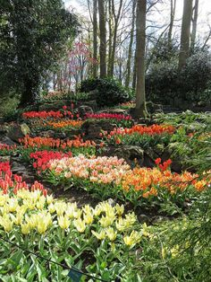 Is Keukenhof Worth It? Tulips and What Else in Keukenhof Gardens (Netherlands)? Tulips Garden, Garden Bulbs, Garden Plants, Hydroponic Gardening, Organic Gardening, Gardening Tips, Indoor Gardening, Gardening Quotes, Gardening Vegetables
