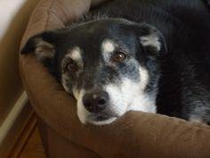 Top Tips for Senior Dog Comfort: Simple changes can make your senior dog more comfortable. | Dog Fancy