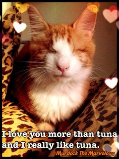 I love you more than tuna, and I really like tuna. www.facebook.com/marvelousmurdock Murdock The Magical Blind Cat <3