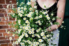 Mutterkraut Gardening, Wreaths, Blog, Crop Rotation, Potting Soil, Fruit Garden, Door Wreaths, Lawn And Garden