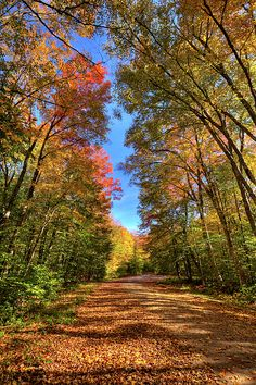 An autumn walk down Rondaxe Road South next to Cary Lake - Old Forge, NY. Adirondack Camping, Old Forge, Autumn Walks, What To Pack, Beautiful Images, Trail, Country Roads, Places, Nature