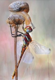 """Dragonfly and Snail - """"Face to Face"""" ~ by Mustafa Öztürk on Animals And Pets, Funny Animals, Cute Animals, Nature Animals, Beautiful Creatures, Animals Beautiful, Beautiful Bugs, Bugs And Insects, Tier Fotos"""