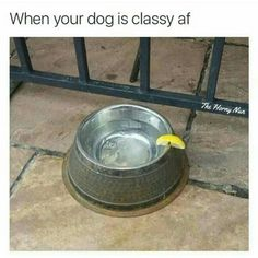 When Your Dog Is Classy Af - Funny Memes. The Funniest Memes worldwide for Birthdays, School, Cats, and Dank Memes - Meme Funny Cute, The Funny, Daily Funny, Memes Humor, Funny Memes, Meme Meme, Dog Memes, Server Humor, Rage Comic