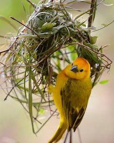 Pretty Birds, Love Birds, Beautiful Birds, Animals Beautiful, Exotic Birds, Colorful Birds, Bird House Kits, Tiny Bird, Kinds Of Birds