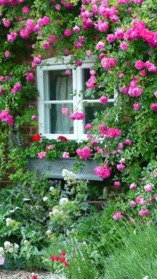 Lovely roses around window