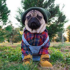 Cat Care Tips, Dog Care, Pug Photos, Doug The Pug, Pumpkin Dog Treats, Pugs And Kisses, Hipster Man, Puppy Clothes, Dog Agility