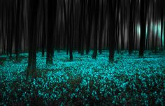 Blue Forest, United Kingdom