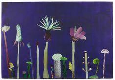Anke Roder, Fantastic Flowers, 2015