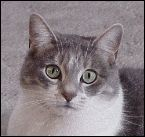 How to Train a Cat to Stop Biting | Cat Training and Behavior