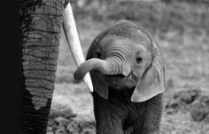 Baby Elephant Sweetness | Content in a Cottage, this is sweetness at it's BEST!