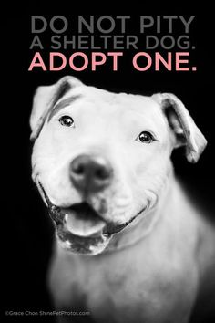 Can I just say that I love that the picture on this is of a pit bull? Shelters are full of these poor dogs because moronic irresponsible people have given them a bad rep with their poor abusive choices. Please realize it isn't the pit bull's fault but the human's. Adopt today!