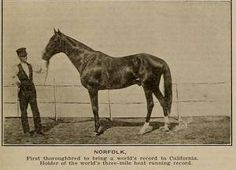 Norfolk(1861)Lexington- Novice By Glencoe. 4x5 To Sumpter, 4x5x5x5 To Sir Archy, 5x5 To Diomed & Transport.  Race Record Not Available Due To The Civil War and Being Kidnapped But Recorded As Undefeated And An Excellent Sire.