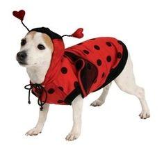 Ladybug Pet Dog Costume