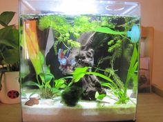 4 gallon tank, Oceanic Systems, Inc. Evolve 4 - LED Light Aquarium Kit, aprox…