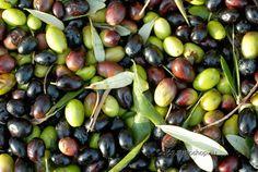 FOGLIE: Crisi: Coldiretti, olive come diamanti, scortate c...