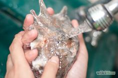 Drill a Hole in a Seashell (Without a Drill) Step 8.jpg