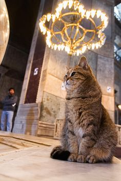 Another strikes a thoughtful pose in Hagia Sophia Basilica, Istanbul. I Love Cats, Cute Cats, Funny Cats, Crazy Cat Lady, Crazy Cats, Animals And Pets, Cute Animals, Hagia Sophia, All About Cats