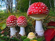 Shadow of Nemesis 5: Weird Scenes Inside the Goldmine; Jack Heart, September 18, 2015, Veterans Today: Amanita muscaria mushroom