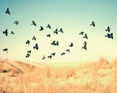 Texas Blackbirds West Texas Photograph - Signed Fine Art Print - Flock, Dreamy, Colorful