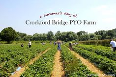 Crockford Bridge Farm