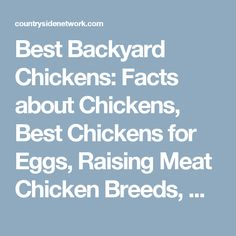 Best Backyard Chickens: Facts about Chickens, Best Chickens for Eggs, Raising Meat Chicken Breeds, What to Feed Chickens & Easy Chicken Coops to Build - Countryside Network Meat Chickens Breeds, Raising Meat Chickens, Raising Backyard Chickens, Backyard Poultry, Backyard Chicken Coops, Chicken Breeds, Pet Chickens, Best Chickens For Eggs, What To Feed Chickens