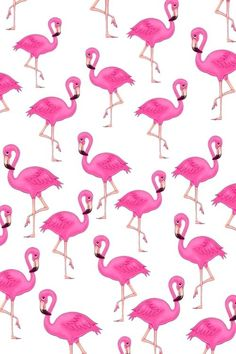 Pink flamingos shared by Brittney Marvét 🤍 on We Heart It Wallpapers WALLPAPERS : PHOTO / CONTENTS  FROM  IN.PINTEREST.COM #BLOG #EDUCRATSWEB