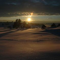 Snow Avilla
