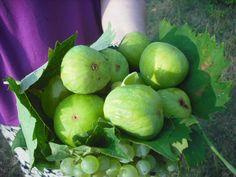 Albanian Cornbread Recipes — Dishmaps