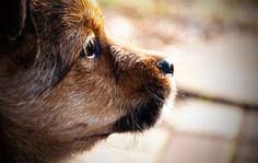 #Puppy #Dog #Animals #Szczeniak #NG