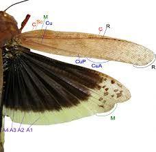 coleoptera wing에 대한 이미지 검색결과