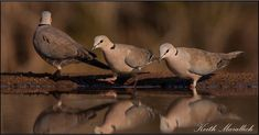 A trio of #doves – one is leaving the table! Leaves, Bird, Table, Photography, Animals, Photograph, Animales, Animaux, Birds