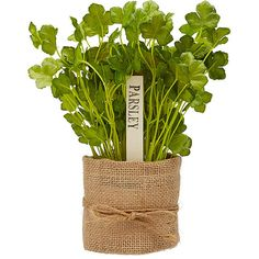 Parsley In Burlap Target Australia ($11) ❤ liked on Polyvore featuring home, home decor, floral decor, fillers, plants, flowers, flower home decor, burlap home decor and flower stem