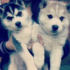 My dream dogs
