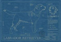 Animal Blueprint Company: Labrador Retriever Dog Print  Rendered in the original format of a working blueprint, this unique wall art features the Labrador Retriever drawn in detail along with factual information that makes that breed special. This unique blueprint is the perfect wall art or gift for Labrador Retriever lovers and owners.  Museum quality print in archival acid free matte board. All framing is 100% poplar wood and made in the USA.