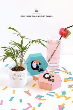 DIY toucan gift boxe