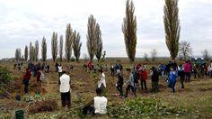 Noi perdele forestiere, sădite de 450 de voluntari, pentru protecția drumurilor și culturilor – Anunturi Muntenia