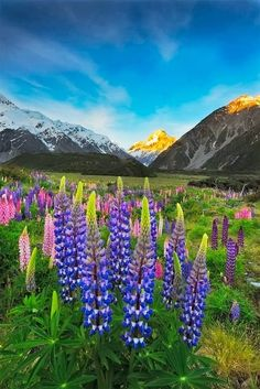 Beautiful Landscape photography : New Zealand. Beautiful World, Beautiful Places, Places To Travel, Places To Go, Landscape Photography, Nature Photography, Photos Voyages, Thinking Day, All Nature