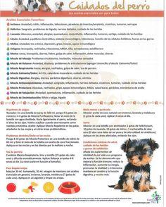 Do Terra para mascotas perro
