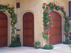 josephs-coat-climbing-rose produces multicolored, red-orange to yellow-orange fragrant blooms for cutting. A natural climber that is best used on fences or arbors.  A beautiful frame for these doors!