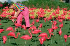 """Don Featherstone - """"Pink Flamingo""""  Medium: Plastic   Who knew a common yard decoration was actually apart of a larger kitsch art movement?"""