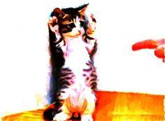 Cat surrenders Cartoon Art, Cats, Gatos, Kitty Cats, Cat, Kitty, Comic Art, Serval Cats, Kittens