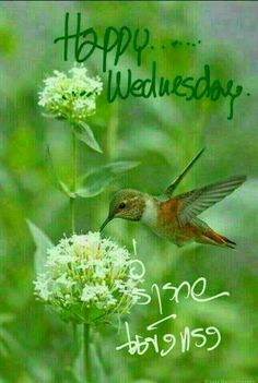 Good Morning Wednesday, Happy Wednesday, Good Day, Wednesday Greetings, Good Morning Images, Morning Quotes, Blessed, Bird, Flowers