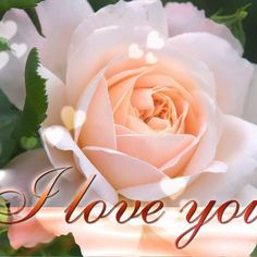 is all about love in our lives, so here a most romantic, most beautiful, most sweet ecard wallpaper of a tender rose to show your love to anyone ! love wallpaper with most beautiful rose aspect ratio Beautiful Love Images, I Love You Images, Hd Love, Beautiful Sunset, Beautiful Roses, Romantic Nature, Romantic Images, Love Rose, Love Flowers