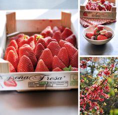 strawberry macarons_rose