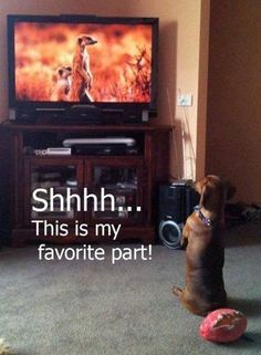 30 Funny animal captions - part 12 (30 pics), animal memes, animal pictures with…